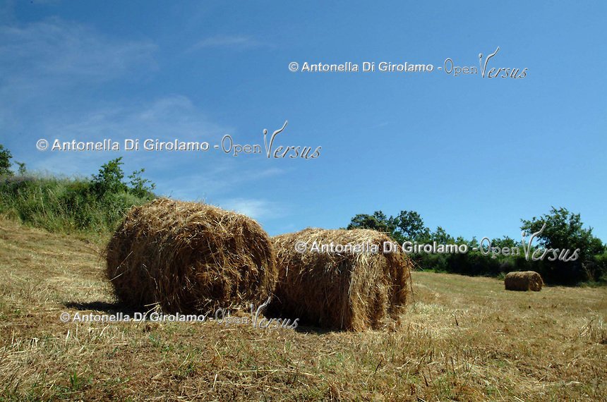 Agricoltura. Agriculture....