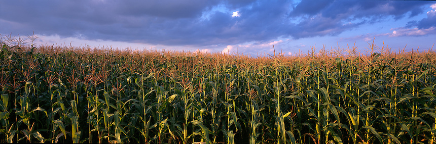 Corn is an important crop for dairy farmers. Northwood, New Hampshire panorama, Photograph by Peter E, Randall