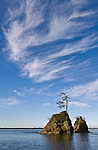 Sea stacks with tree, part of the Three Graces; Tillamook Bay, Northern Oregon coast.