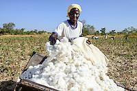 BURKINA FASO, village GOUMSIN near SAPONE, organic and fair trade cotton farming, manual harvest at farm of woman farmer HÉLÈNE KABRE / fair gehandelte Biobaumwolle, Ernte bei Kleinbaeuerin HÉLÈNE KABRE