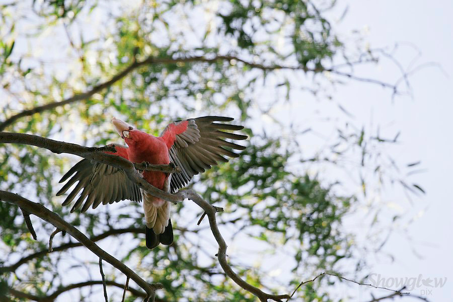 Image Ref: A122<br /> Location: Hattah-Kulkyne National Park<br /> Date: 14th May 2014