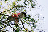 Image Ref: A122<br />