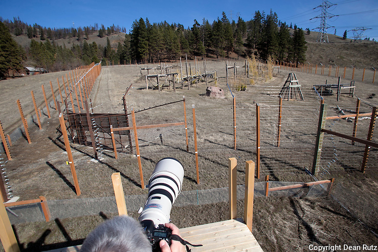 Dean Rutz photographs at the Chimpanzee sanctuary NW in Cle Elem, Wash.