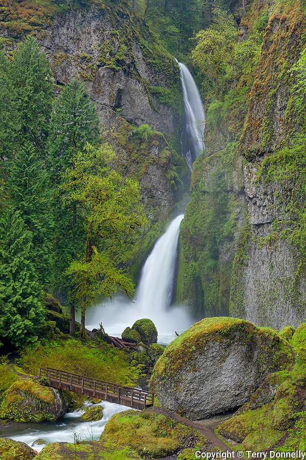Columbia Gorge National Scenic Area, Mouunt Hood National Forest, OR<br /> Wahclella Falls at the head of a northwest rainforest canyon
