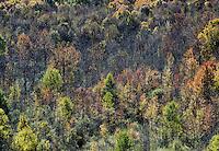 Autumn forest trees, Casville, New York, USA