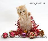 Kim, CHRISTMAS ANIMALS, photos, GBJBWP18111,#XA# stickers