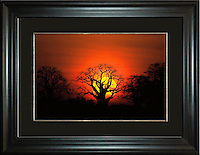 Baobab Tree Sunrise<br />