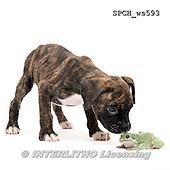 Xavier, ANIMALS, REALISTISCHE TIERE, ANIMALES REALISTICOS, FONDLESS, photos+++++,SPCHWS593,#A#