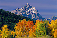 Aspens at Oxbow Bend<br /> Snake River and the Grand Teton<br /> Grand Teton National Park<br /> Rocky Mountains, Wyoming