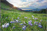 The hike to Lower Lakes Basin is an easy 2.5 miles that travels ~ 1600 vertical feet. After you reach the basin, the wildflowers fill the Colorado landscape. In this case, Columbine, the state wildflower, were plentiful. <br />
