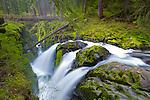Olympic National Park, WA <br /> Sol Duc River splits at Sol Duc Falls and flows under a hiker's foot bridge