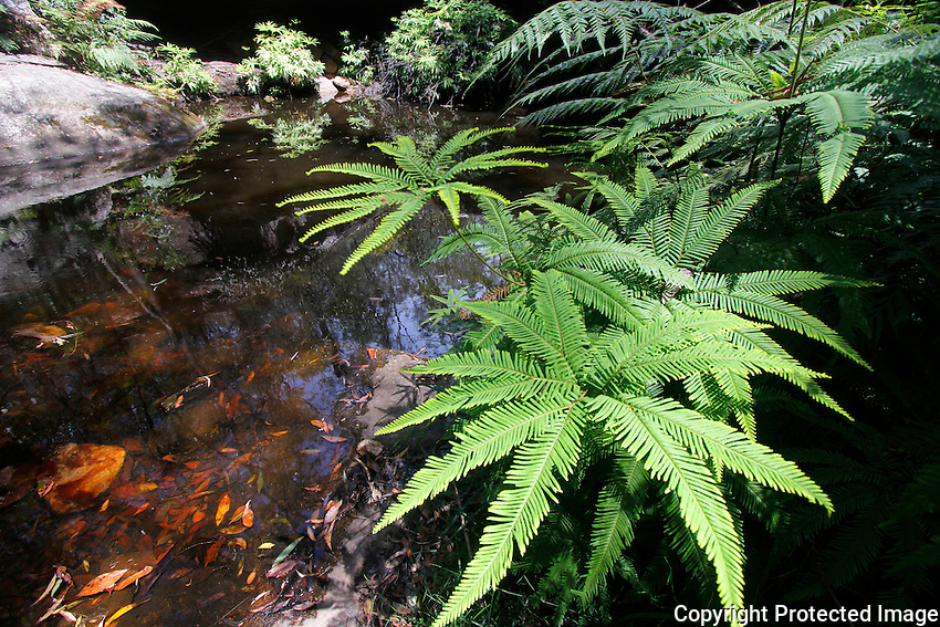 Fern Tree Pool, Cania Gorge National Park, Queensland