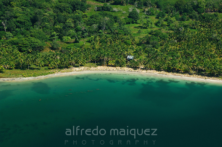 Aerial view of beach and palm tree forest. Bocas del Toro, Panama, Caribbean, Central America.