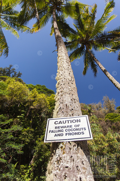Caution sign warning of falling coconuts in Kolekole Beach Park, Honomu, Big Island.