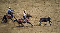 TEAM STEER ROPING - SALINAS RODEO, CALIFORNIA