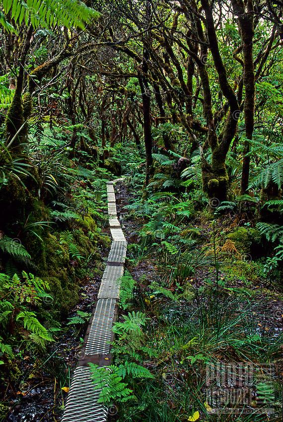 Kamakou Nature Conservancy Preserve. Trail/boardwalk