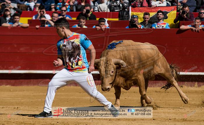 Feria de Fallas 2017.<br /> XXII Concurso Nacional de Recortes.<br /> Toros de Jandilla.<br /> Valencia, Valencia (Spain).<br /> 18 de marzo de 2017.