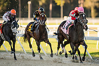 OLDSMAR, FLORIDA - FEBRUARY 11: McCracken #8, ridden by Brian Joseph Hernandez (pink hat), down the final stretch and wins the Sam F. Davis Stakes at Tampa Bay Downs on February 11, 2017 in Oldsmar, Florida (photo by Douglas DeFelice/Eclipse Sportswire/Getty Images)