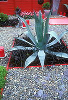 Garden style: modern and sleek backyard outdoor room with specimen succulent agave plant inset, pebble stone mulch, Ophiopogon black purple foliage, pink dahlias, pink candles for illumination lighting, pink edged garden beds, pink touches, red wall, container plants, for a color-themed garden of textures, spiky, flowers, distinctive look