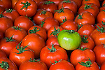 Fresh picked tomatoes, San Luis Obispo, California