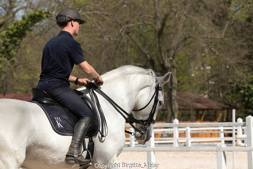 Male rider on white Kladruber Horse, riding outdoors on a warm Spring day in Kladruby Nad Labem, The Czech Republic, Europe