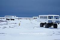 01874-06111 Polar Bear (Ursus maritimus) & Tundra Buggies   Churchill  MB