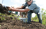 "Carl Nettles scoops away vegatation and thousands of fire ants that cover and incubate the alligator eggs that he and Wayne ""Hoho"" Brooks are preparing to harvest at Lake Miccosukee July 19, 2007.  Besides the fire ants, the egg harvesters have to contend with angry female alligators, poisonous snakes, wasps, hornets and other creatures that favor the alligator nests and surrounding vegetation and water.  Nettles wound up with a couple of dozen fire ant bites after harvesting the eggs."