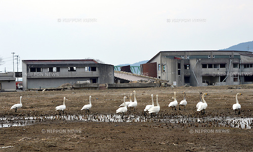 March 8, 2013, Ishinomaki, Japan - The gutted school houses still stand along Kitagami River in Ishinomaki, Miyagi Prefecture, on March 8, 2013. Teachers and pupils of the public school numbering 84 were perished when tsunami over-flooded the river and swallowed them up in its wake two years ago on March 11. (Photo by Natsuki Sakai/AFLO).