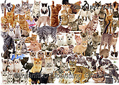 Kim, ANIMALS, REALISTISCHE TIERE, ANIMALES REALISTICOS, fondless, photos,+Cat Montage jigsaw,++++,GBJBWP13686,#a#, EVERYDAY