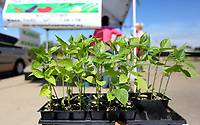 NWA Democrat-Gazette/DAVID GOTTSCHALK Bell pepper plants for sale are visible Tuesday, May 14, 2019, at the Springdale Farmers' Market at the Jones Center in Springdale. The market, that has been at the Jones Center since 1997, is open Tuesday, Thursday and Saturday from 7:00 a.m. to 1:00 p.m. until October.