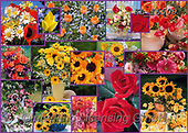 COLLAGEN, photos+++++,KL16509,#collagen#,flowers, EVERYDAY ,collages,puzzles