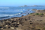 elephant seals at Ano Nuevo State Park