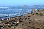 elephant seals at Ano Nuevo State Park