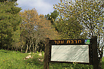 Israel, Upper Galilee, Hurvat Eker in Naftali Mountains forest