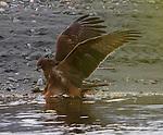 NZ16 Birds & Wild Life