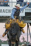 Dean Wadsworth rides in the Saddle Bronc Riding event during the Reno Rodeo on Sunday, June 23, 2019.