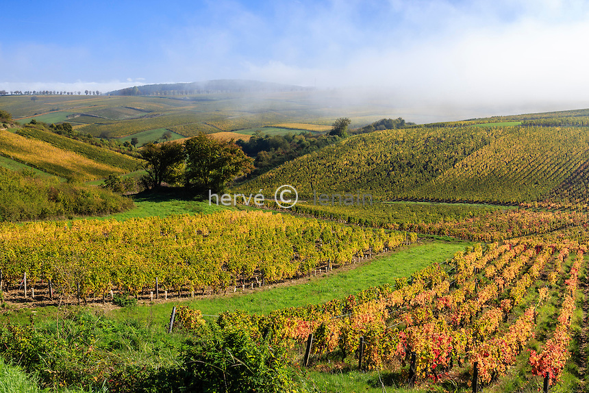 France, Cher (18), région du Berry, Sancerre, le vignoble en automne et brumes matinales // France, Cher, Sancerre, the vineyard in autumn, morning mists