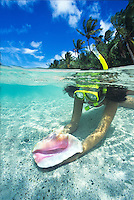 Split level of a snorkeler<br /> with an empty conch shell<br /> St. John<br /> U.S. Virgin Islands