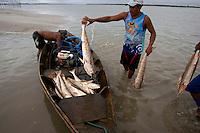 Pescadores artesanais transportam peixes da espécie Corvina capturados no curral (armadinha fixa no solo e construída com varas e arames onde os peixes são aprisionados na preamar e removidos na maré vazante) após a despesca, até a embarcação. A pesca é realizada nas proximidades da praia de Paxicú na Reserva Extrativista Marinha Mãe Grande localizada no litoral do Pará, na foz do rio Amazonas.<br /> Curuça, Pará, Brasil.<br /> Foto: Paulo Santos<br /> 18/02/2011