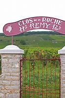 Vineyard. Clos de la Roche, Heritiers Remy. Burgundy, France