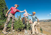 Mike Stock (left) hands meat to Outdoor Life Editor Andrew McKean while guide Greg Kriese with Trefren Outfitters preps horses to return to camp while hunting on top of Greyback Ridge in the Hoeback Drainage of Wyoming Region H, outside of Alpine, Wyoming, Tuesday, September 22, 2015. <br /> <br /> Photo by Matt Nager