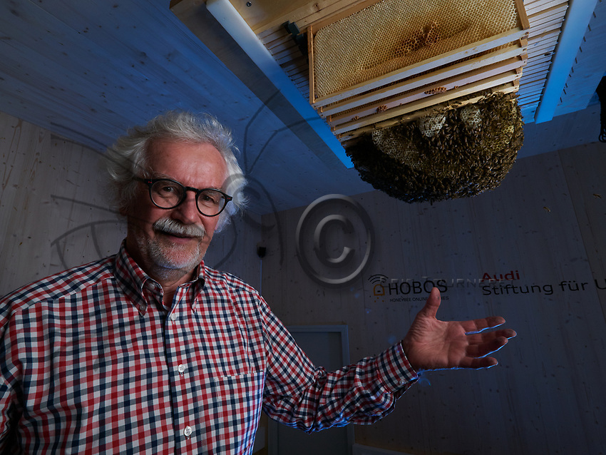 Portrait of Professor Jurgen Tautz, Hobos, University of W&uuml;rzburg, next to the colony installed in the experimental building. This experience allows for constant monitoring by thermal, infrared and 3D cameras of the bees' activities in the nest and also their sorties throughout the year.<br /> Portrait du Professeur Jurgen Tautz, Hobos, universit&eacute; de W&uuml;rzburg &agrave; cot&eacute; de la colonie install&eacute;e dans le b&acirc;timent exp&eacute;riemental. Cette exp&eacute;rience permet un suivi constant par cam&eacute;ras thermiques, infra-rouges et 3D des activit&eacute;s des abeilles sur le nid mais aussi leurs sorties tout au long de l&rsquo;ann&eacute;e.