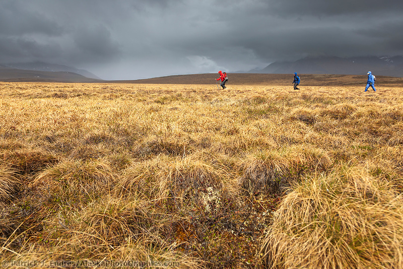 Tussock hiking, Brooks range, National Petroleum Reserve, Alaska.