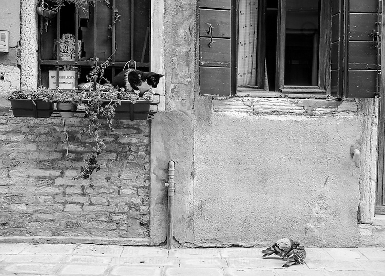 A cat in a Venice windowsill eyes two pigeons on the sidewalk below