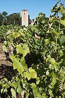 Europe/France/Midi-Pyrénées/32/Gers/env de Montréal: le vignoble et Tour de Lamothe, tour de défense du XIII ème et le vignoble d'Armagnac