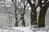 Snow covered trees on Hampstead Heath, North London, United Kingdom