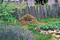 Compost pile in rustic country garden by old wooden fence, plimoth plantation