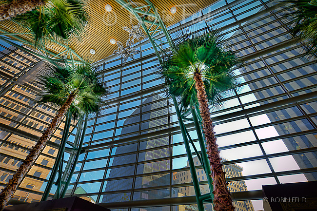 Wintergarden in Schuster Center showing palm trees in the foreground, buildings of Dayton in background.