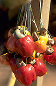 Amazon, Brazil. Cashew (caju, Anacardium occidentale) fruits at the market hanging on strands of palm leaf.