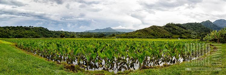 A taro field outside of Hanalei, Kaua'i.
